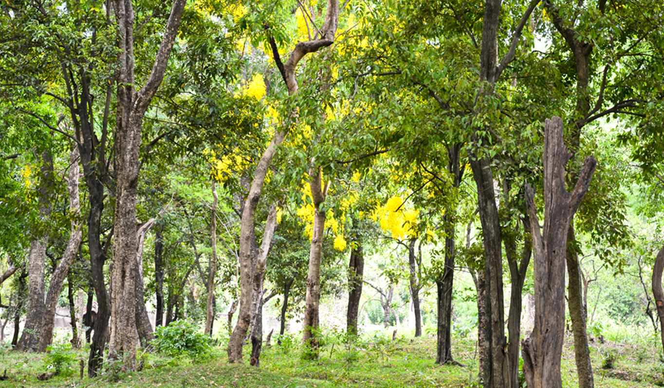 The Ancient Divinity and Healing of Sandalwood — The
