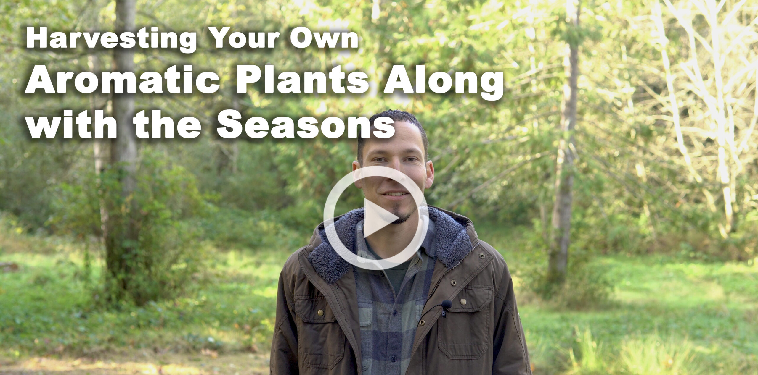 Harvesting Your Own Aromatic Plants Along with the Seasons