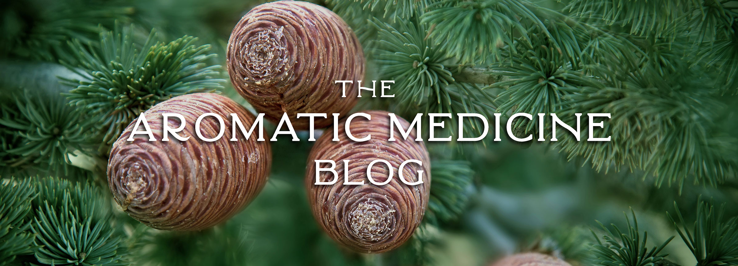The Aromatic Medicine School Blog